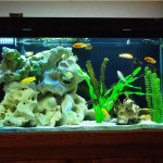 Tropical Fish Home Aquarium