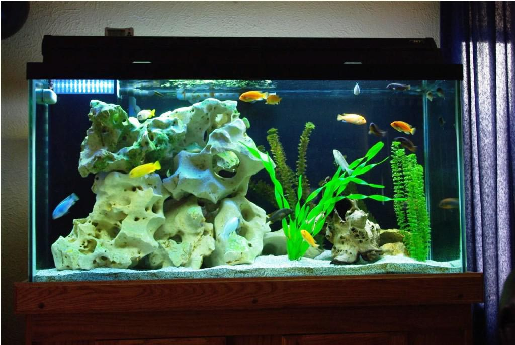 Tropical Fish Home Aquarium Aquarium Design Ideas