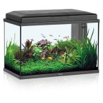 Tropical Fish Small Aquariums