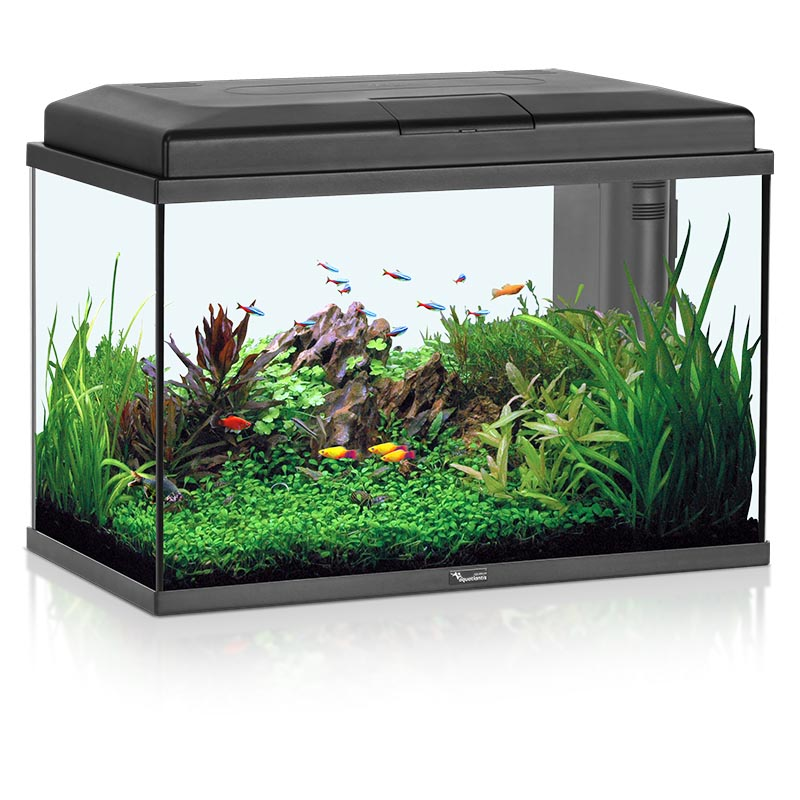 Setup for a small aquarium fish aquarium design ideas for Exotic fish tanks