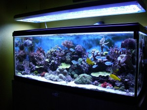 Tropical Freshwater Aquarium Fish Compatibility