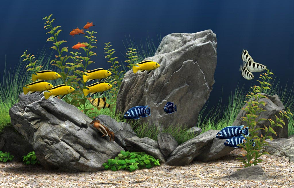Tropical Freshwater Aquarium Fish Images