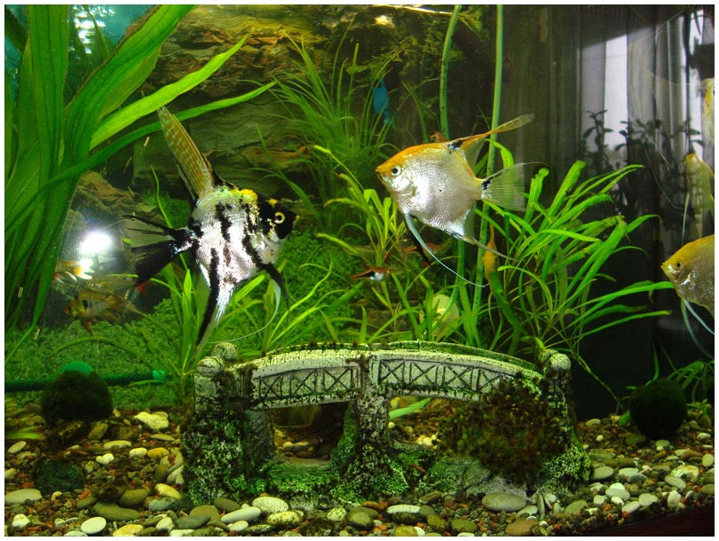 Freshwater aquarium fish list for Coolest freshwater fish