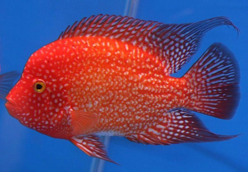 Tropical Marine Aquarium Fish Species