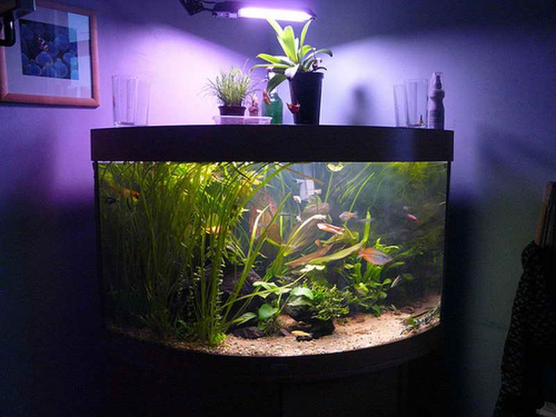 unique fish aquarium decor aquarium design ideas. Black Bedroom Furniture Sets. Home Design Ideas