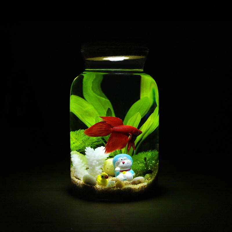 Very small aquarium fish aquarium design ideas for Small fish tank