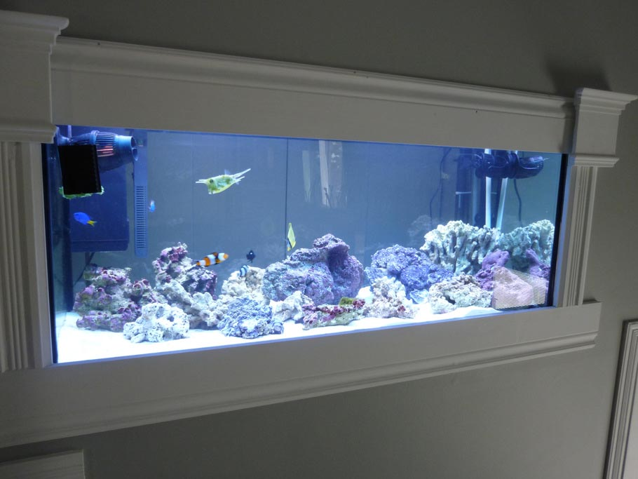 Wall mounted reef aquarium aquarium design ideas for Fish tank built into wall